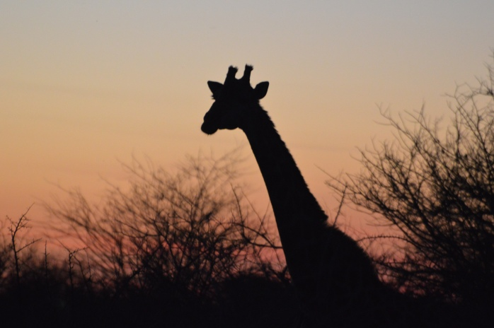 Don't let the sun go down on these wonderful animals!