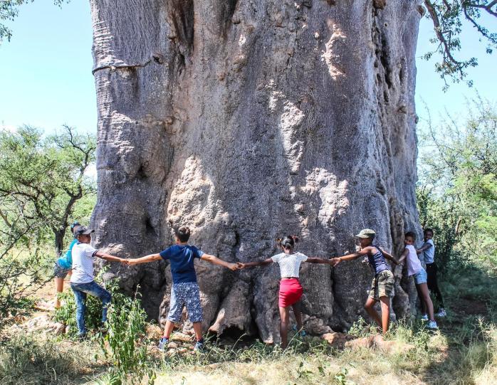 Baobab chain