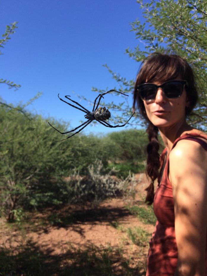 Nadine checks out a garden orb spider