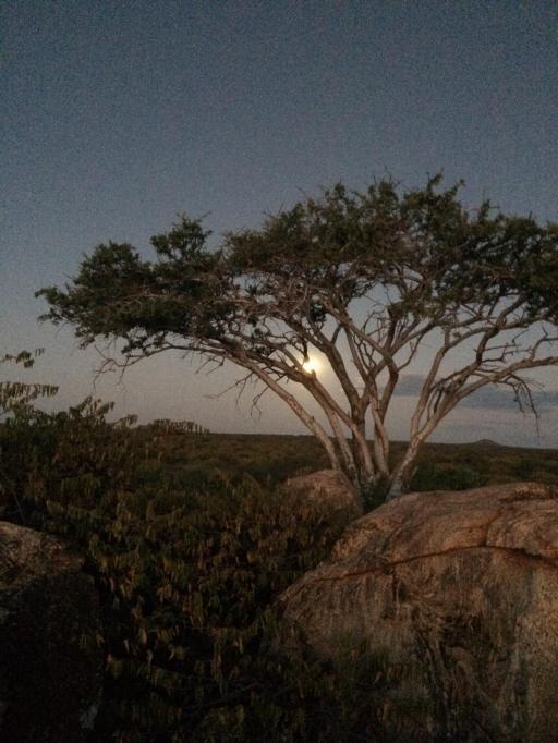 Giant full moon lit up the stunning bushveld scenery