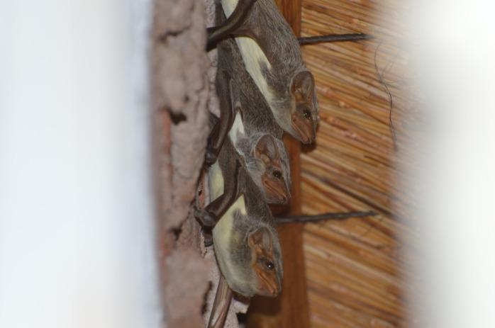 Bat friends in camp