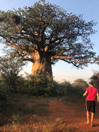 Camera trapping at baobabs for sleeping sites