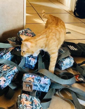 Camera trap assistance