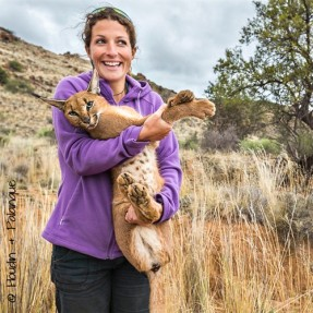 Dr. Marine Drouilly handling a caracal collared for the Karoo Predator Project (right) (© N. Houdin & D. Palanque)